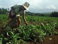 PRINCIPAL PROVEEDORA DE PRODUCTOS AGRICOLAS.