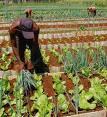 POTENCIAN SUSTITUCION DE IMPORTACIONES AGRICULTORES AVILEÑOS